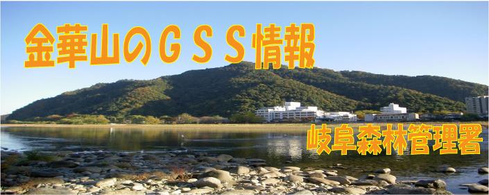 金華山のGSS情報