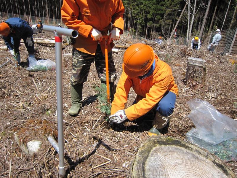 岐阜県と合同でコンテナ苗を試験植栽