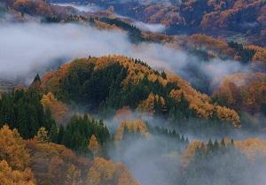 霧の大望峠フォト