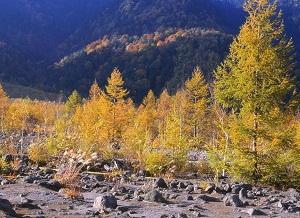 晩秋の焼岳山麓フォト
