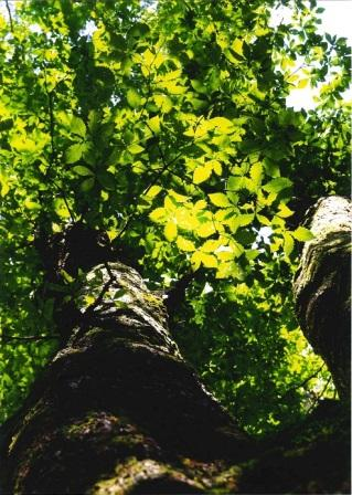 悠久の森の輝き
