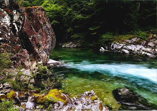 流れる宝石と岩サツキ