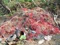 不法投棄されたゴミ