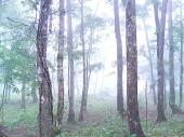 森林管理署へようこそ