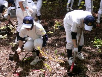 アオダモを植える高校球児達