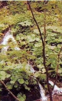 オクルンベツ水源の森の清流