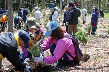 ヒバを植樹する参加者