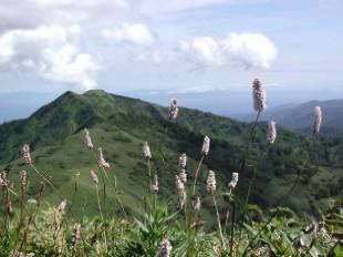 千軒岳植物群落保護林