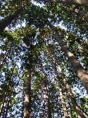 檜山古事の森・林内