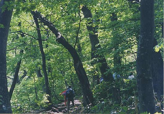 森林のイメージ写真