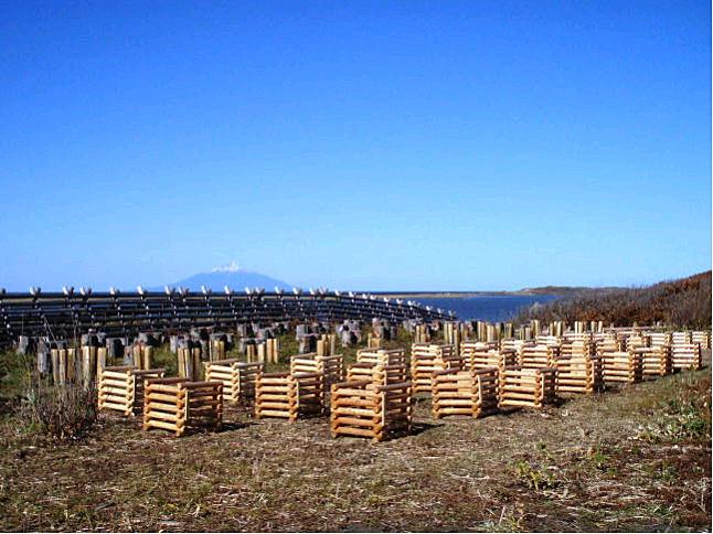 北のしじみの森林(間伐材利用防風柵)