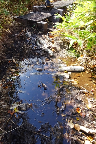 倒木をぬかるみへ敷いた状態 本格的な歩道のぬかるみ対策は、関係各機関などで協議することとしていま