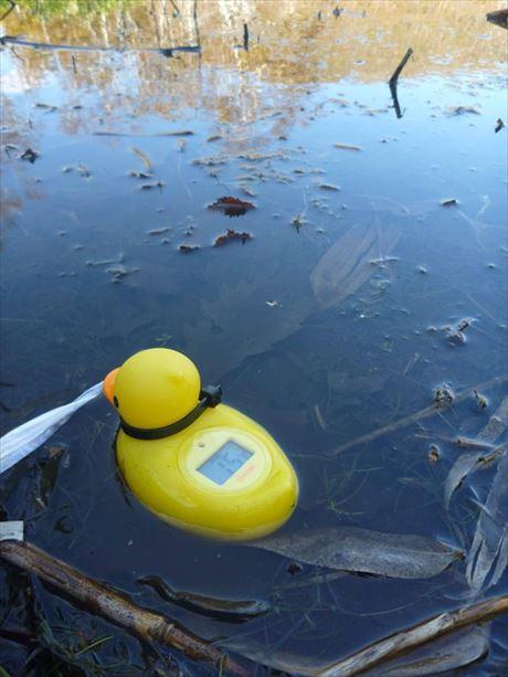 沼の水温は15度