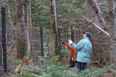 防鹿柵への倒木等の被害調査