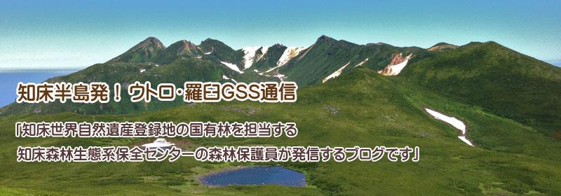 知床!ウトロ・羅臼GSS通信