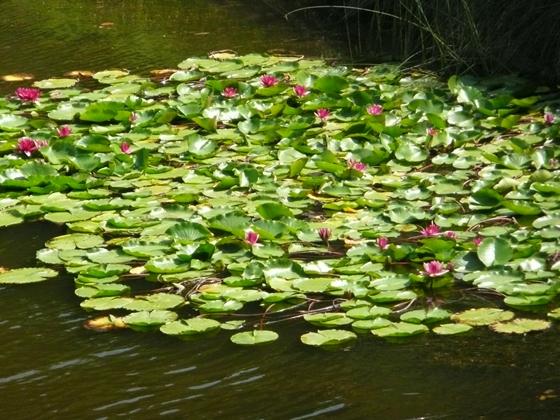 小山の沢林道から撮影した貯水池の水草の風景