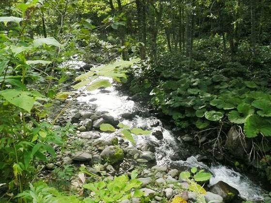 東暑寒林道は清流沿いにあり、水の流れが午後の光に輝いていました