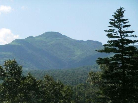 定点地付近からトドマツを前景に本峰を眺めてみました