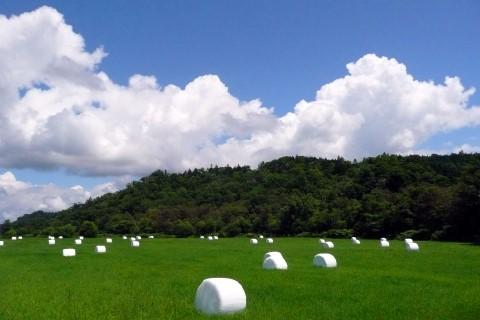 青い空と白い雲が夏のさわやかさを演出してくれました