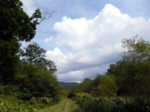 草刈り作業が終了し、見通しの良くなった林道の向こう側に沸いては消えてゆく入道雲が浮いていました。