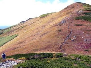 8合目扇風岩付近のナナカマドが紅葉のピークを迎えているようです。