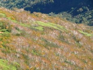 ダケカンバの黄葉が、今年も美しいコントラストを見せてくれました。