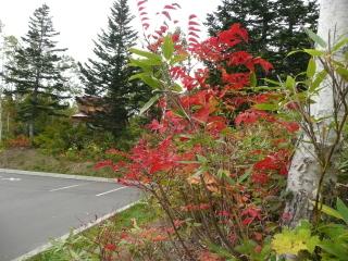 秋の深まりを肌で感じる、紅葉越しに望んだ箸別小屋です。
