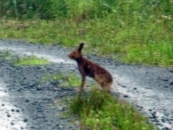 ユキウサギの画像 p1_3