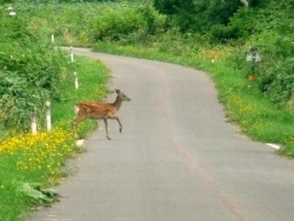 箸別登山道までの町道では、シカが横切ることがありますので注意してください
