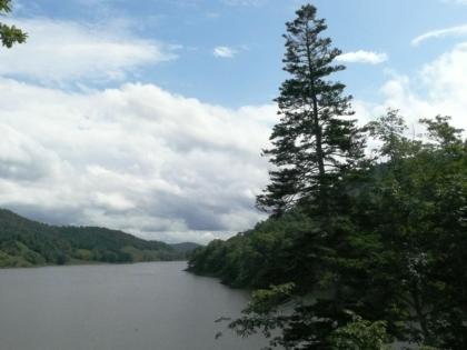 留萌ダムの湖畔で、そびえ立つトドマツは一つのアクセントとなっています