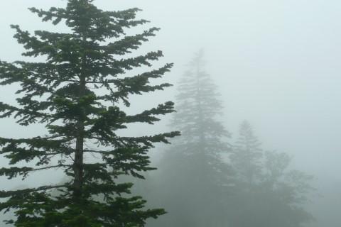 舎熊岳林道は霧に覆われており、トドマツのシルエットが幻想的に浮かび上がってました。