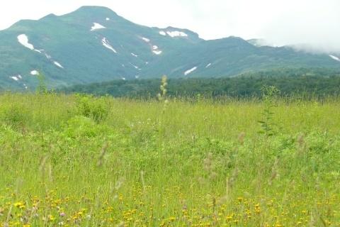 暑寒別岳の山容を望むことができました。