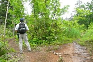1合目へ至る区間での湿地の分岐点です。