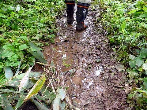 登山道は連日の雨でぬかるみ状態でとても滑りやすいので注意してください