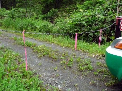 安全な通行を願って、分かりやすくするためゲートのチェーンにピンク色のテープを吊り下げました。