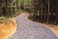 林業専用道