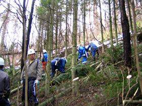 ボランティアによる間伐の様子