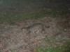 野生生物調査ネコの写真
