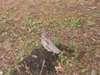野生生物調査エゾライチョウの写真