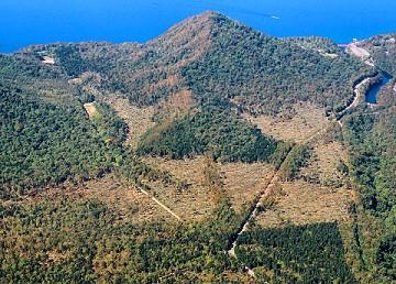上空から見た千歳市モーラップの森林風