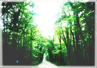 緑の回廊の写真