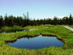 「浮島湿原」の風景