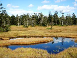 「浮島湿原」の秋