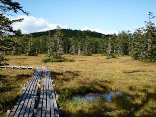 「浮島湿原」内の木道