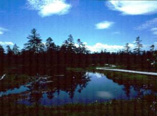 「浮島湿原」の夏