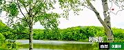 利根別自然休養林