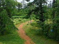外国樹種見本林の写真