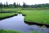 湿原地帯(神仙沼)の写真