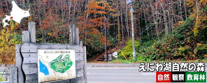 えにわ湖自然の森自然観察教育林