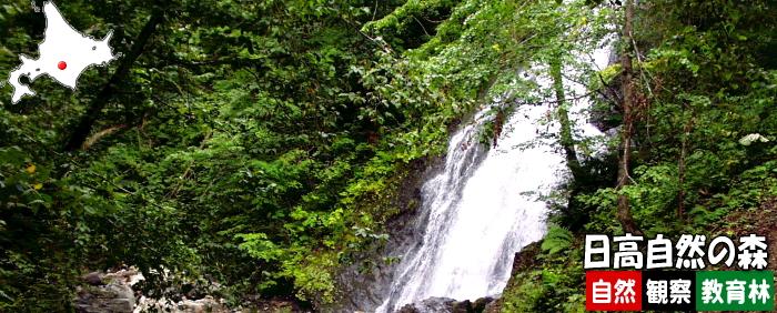 日高自然の森自然観察教育林